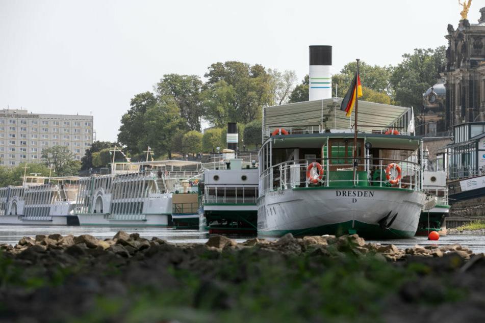 Eiliger Antrag: Stadt Dresden soll die Weiße Flotte kaufen