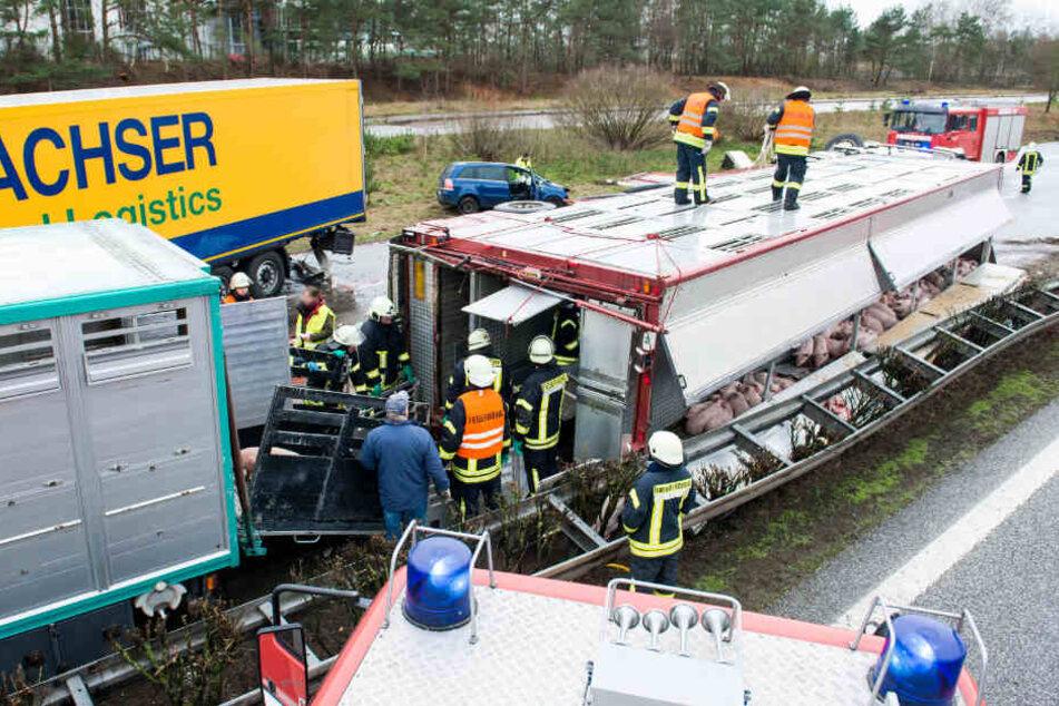 Feuerwehrleute stehen nach dem schrecklichen Verkehrsunfall auf der A24 neben dem verunglückten Viehtransporter und bergen Schweine.