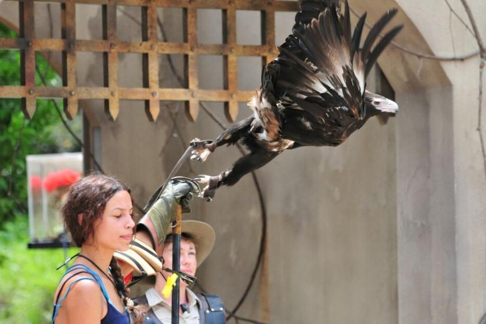 Der Adler fliegt auf Model-Giseles Arm.