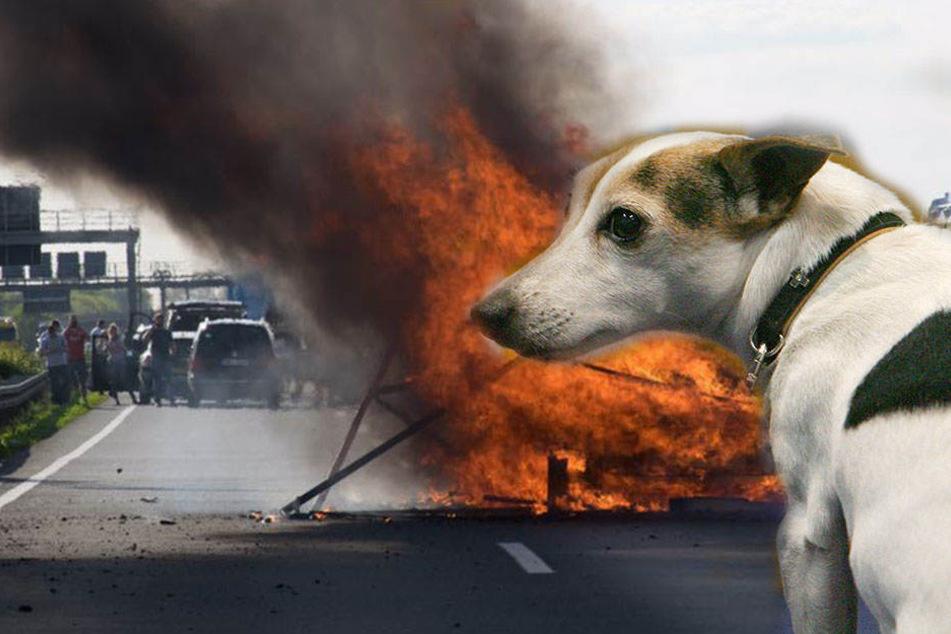 Am Mittwochmorgen fing ein Laster auf der A9 Feuer. Der Lkw hatte Hundefutter geladen. (Symbolbild)