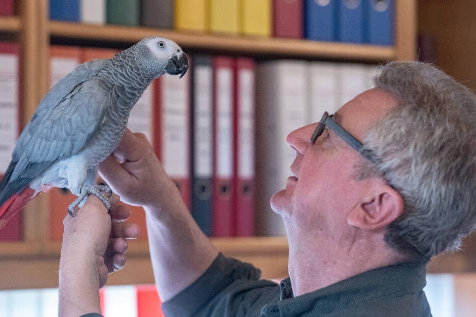 Wolfgang Plach spricht mit seinem Papagei Carlo.