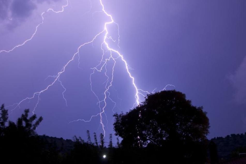 Der Blitz traf erst eine Baumgruppe und dann die Polizistin. (Symbolbild)