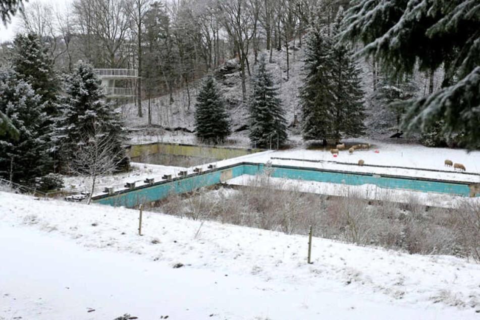 Das 1966 erbaute Freibad Zschopau, mit 50-Meter-Becken und Sprungturm, wird seit sieben Jahren nicht mehr genutzt. Es soll zu einem Naturbad umgewandelt werden.