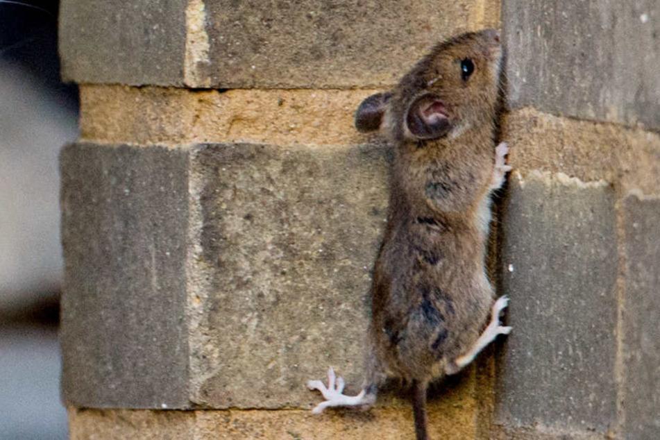 Im Mainzer Hauptbahnhof wurde die Maus zwischen dem Essen gefunden. (Symbolbild)