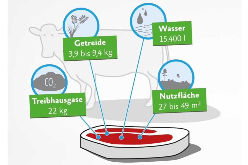 Die Ressourcen, die zur Herstellung von einem Kilo Rindfleisch benötigt werden.