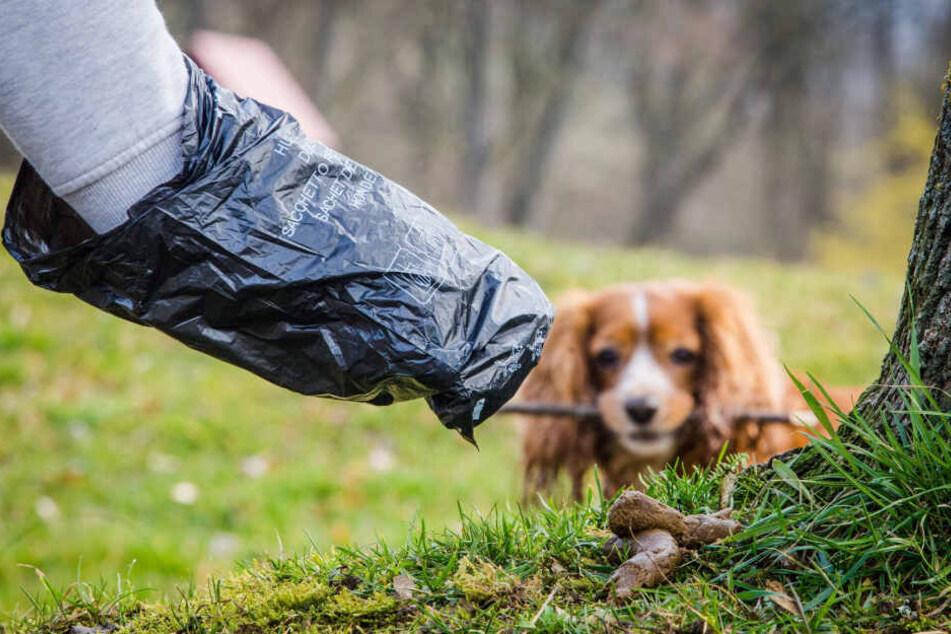 Plauen geht gegen Tretminen vor: Greifen Hundehalter nicht zum Beutel, werden bis zu 1000 Euro Strafe fällig.