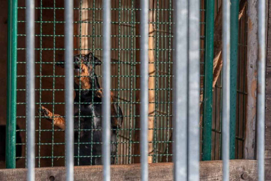 Ohne die Feuerwehr wären die Hunde im Zwinger gestorben.