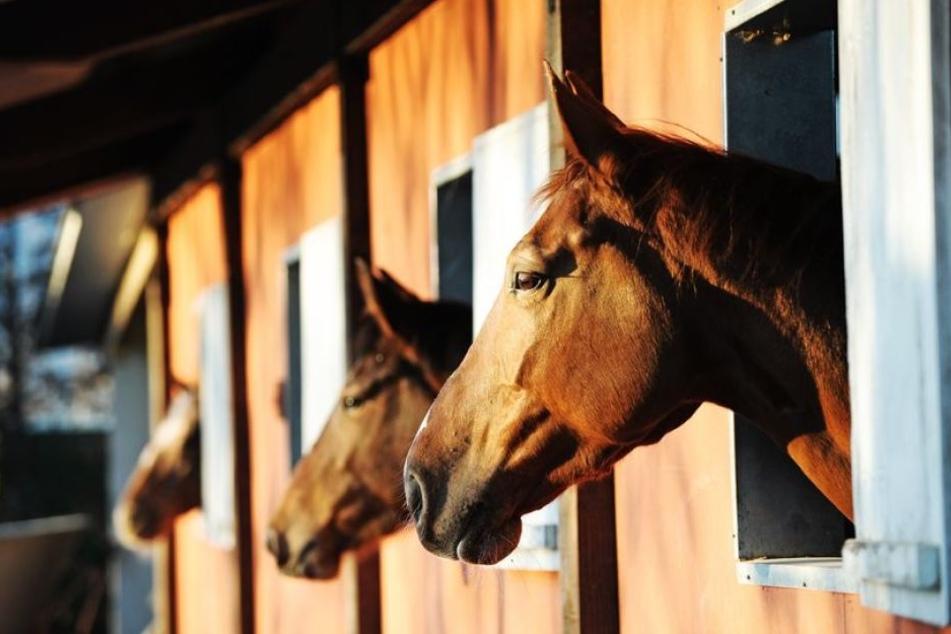 Zehn Pferde konnten aus der Scheune gerettet werden, die gegen Mitternacht abbrannte. (Symbolbild)