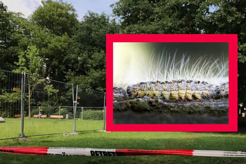 Gefährliche Raupen! Park für Besucher gesperrt