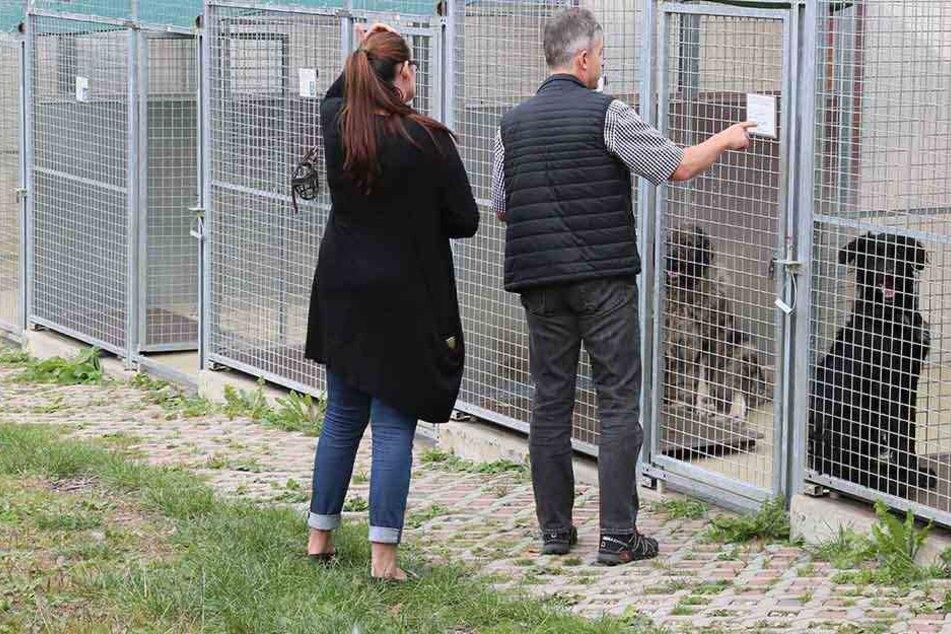 Die Stadträte sahen sich die Haltungsbedingungen der in Vielau lebenden Tiere  - wie hier die Hundezwinger - ganz genau an.