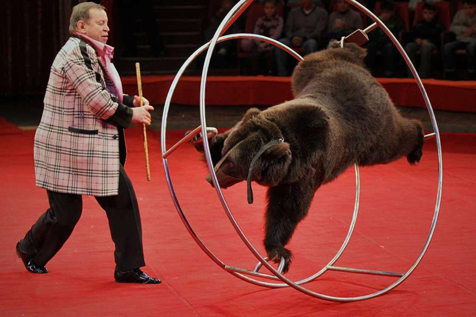 Braunbär Ben musste nach einem Gerichtsprozess nicht mehr zurück in den Zirkus. (Symbolbild)