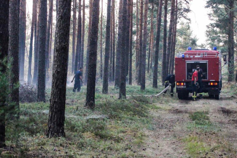 Feuerwehrleute löschen Glutnester beim Waldbrand auf dem ehemaligen Truppenübungsplatz in Südbrandenburg.