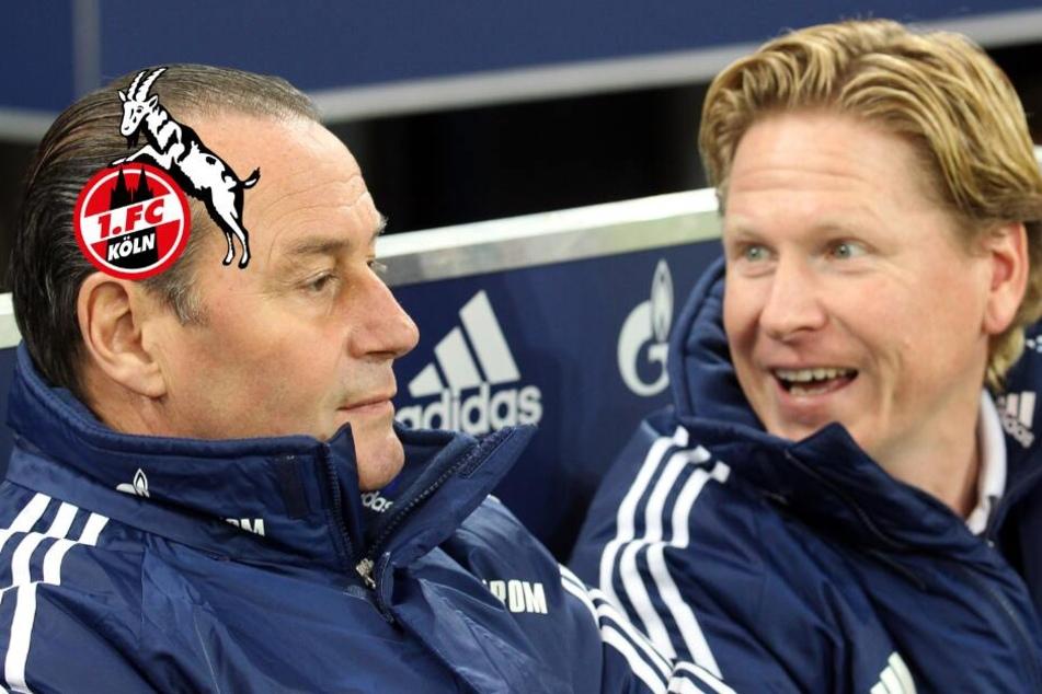 Huub Stevens bezweifelt, dass Trainer Gisdol zu Köln passt