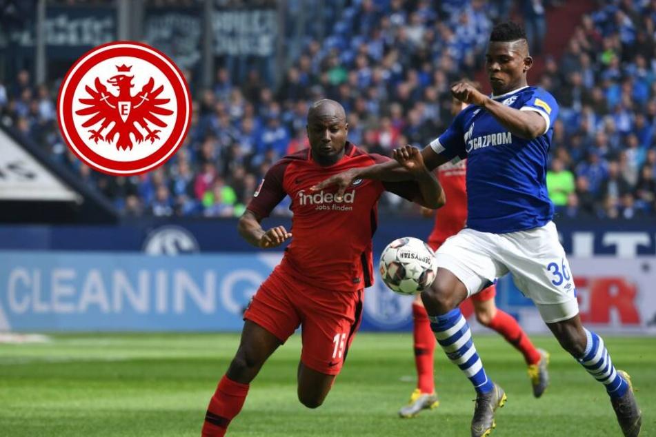 VAR-Wahnsinn auf Schalke! Eintracht siegt in der 99. Minute dank Jovic