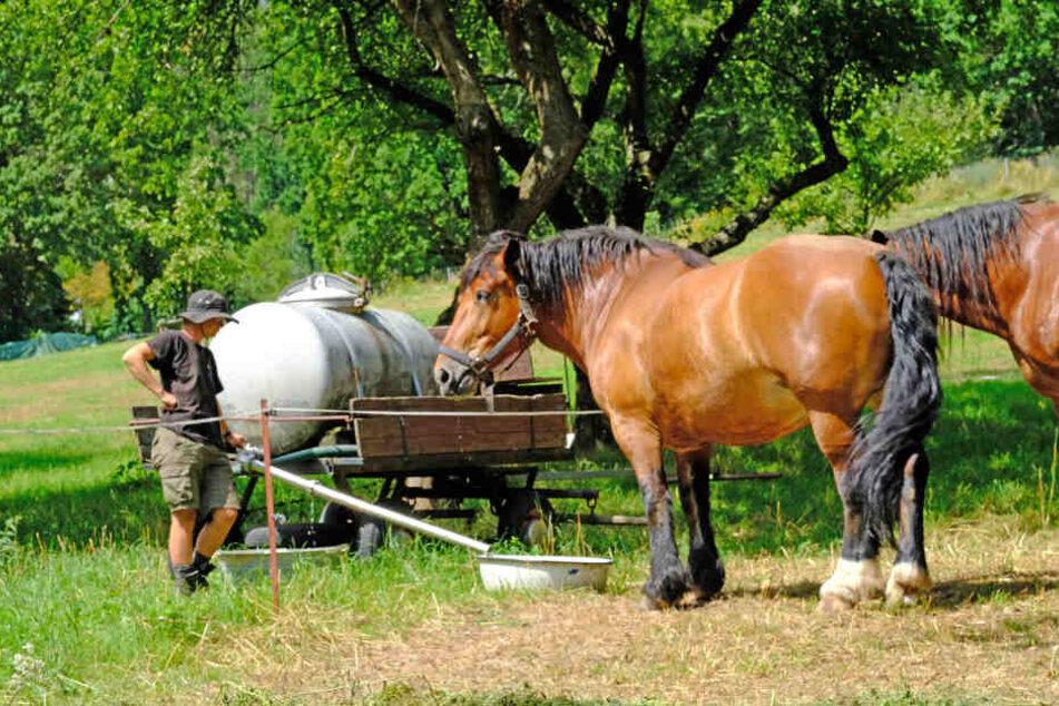 Auf der Koppel von Gut Klosterbuch grasten die Pferde der Lebenskünstler drei Tage lang.