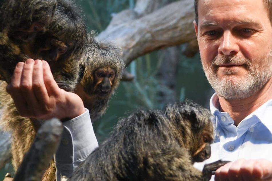 Die Aufnahme aus dem Jahr 2018 zeigt den heutigen Frankfurter Zoodirektor Miguel Casares zusammen mit einigen Weißkopfsakis.