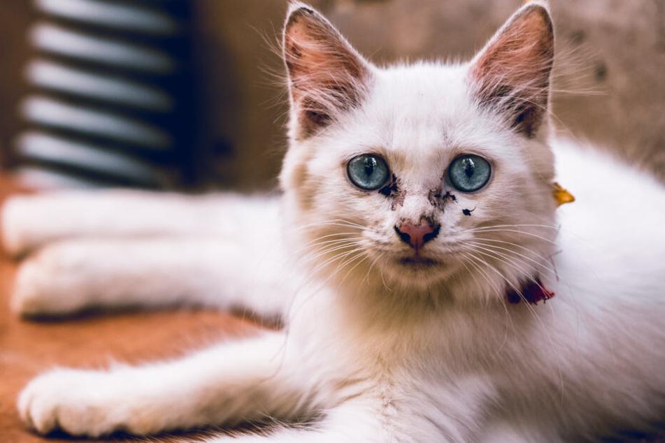 Katzen mit Diesel übergossen: Fieser Anschlag auf Tier-Auffangstation