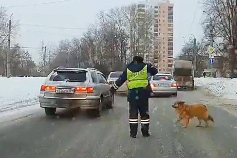 Der russische Polizist hält dem Hund den Weg frei.