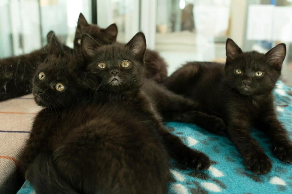 14 Katzenbabys mussten gerettet werden.