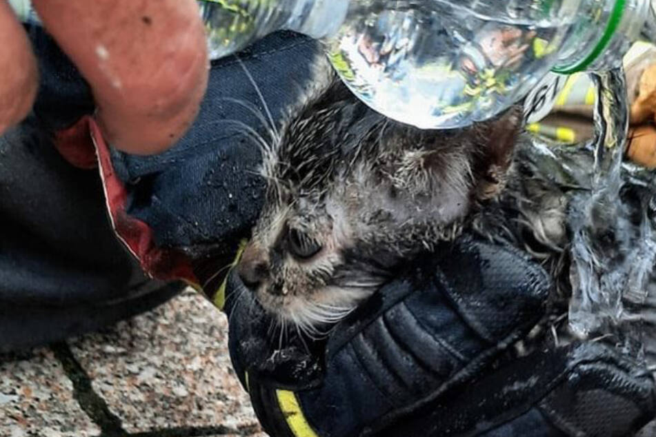 Kameraden der Freiwilligen Feuerwehr Halle-Dölau versorgten die geretteten Kätzchen mit Wasser.