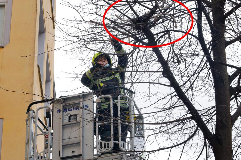 Chemnitz: Huch, was holt die Chemnitzer Feuerwehr denn hier vom Baum?