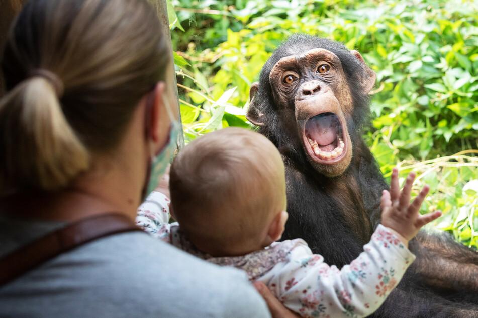 Gar nicht affig: Zoos und Tierparks dürfen öffnen.