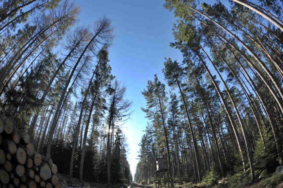 Der Wald im Hessischen Ried braucht dringend Wasser. (Symbolbild)