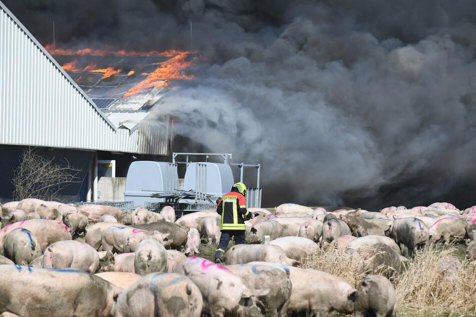 Nach Großbrand mit mehr als 55.000 toten Tieren: Polizei rätselt über Ursache
