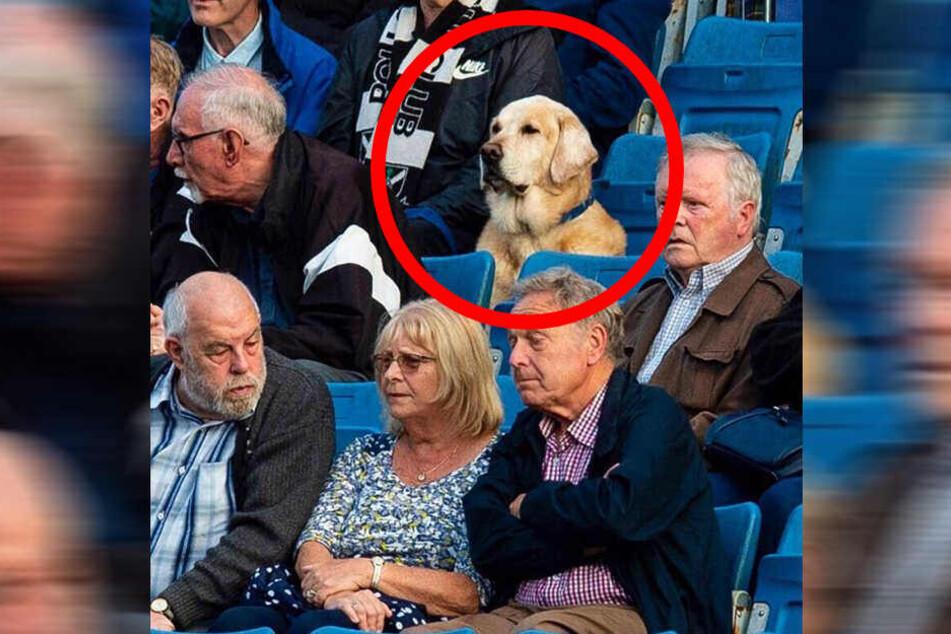 Der Hund im Stadion zwischen den anderen Zuschauern.