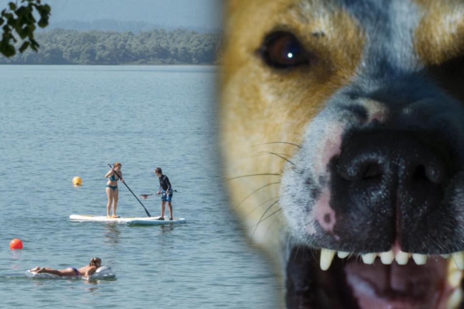 Horror am See: Hund fällt Frau in Nacktbadezone an und beißt ihr in die Brust
