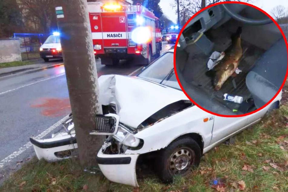 Weihnachts-Karpfen verursacht schweren Unfall