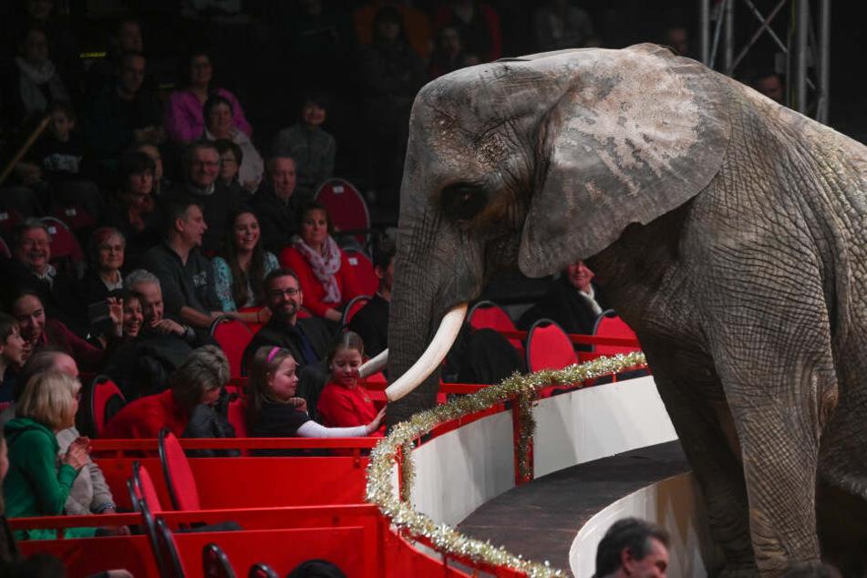 Wer in der Loge sitzt, ist immer ganz nah dran, auch am Rüssel des Elefanten.