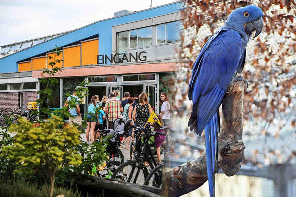 Großalarm im Zoo! Seltener Papagei abgehauen