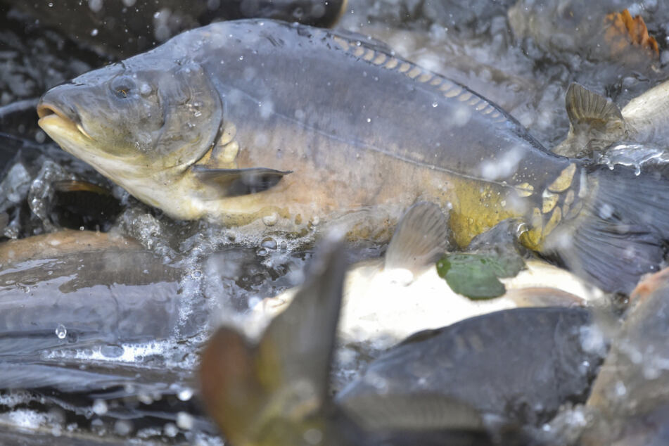 Fischproduktion in Bayern: Das ist besonders beliebt