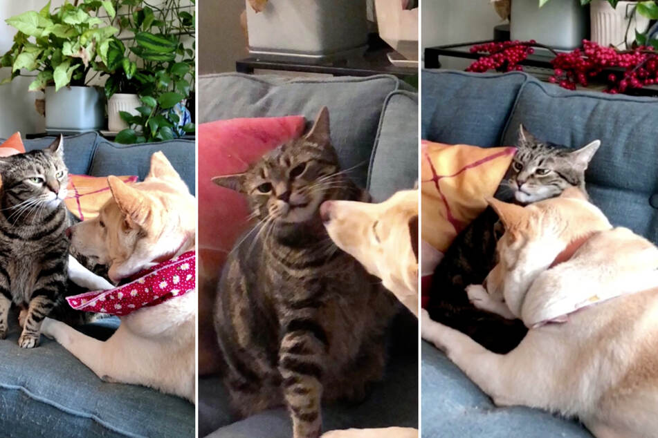 Can a cat look anymore annoyed than this? (collage)