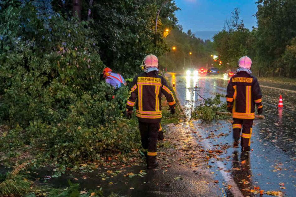 Auch Bäume stürzten durch das Sturmtief auf Straßen.