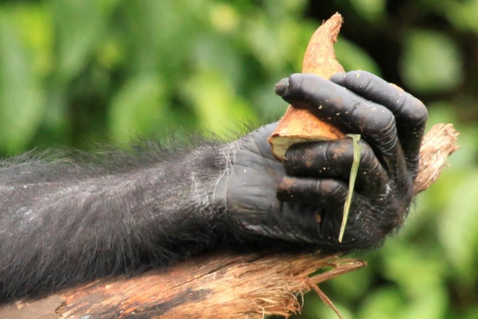 Affenhand und mehr im Wald gefunden: Neue Details bekannt