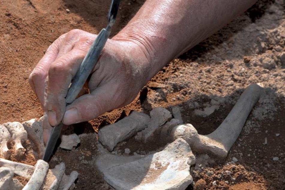 Menschliche Knochen wie diese fanden Bauarbeiter in Hoyerswerda.