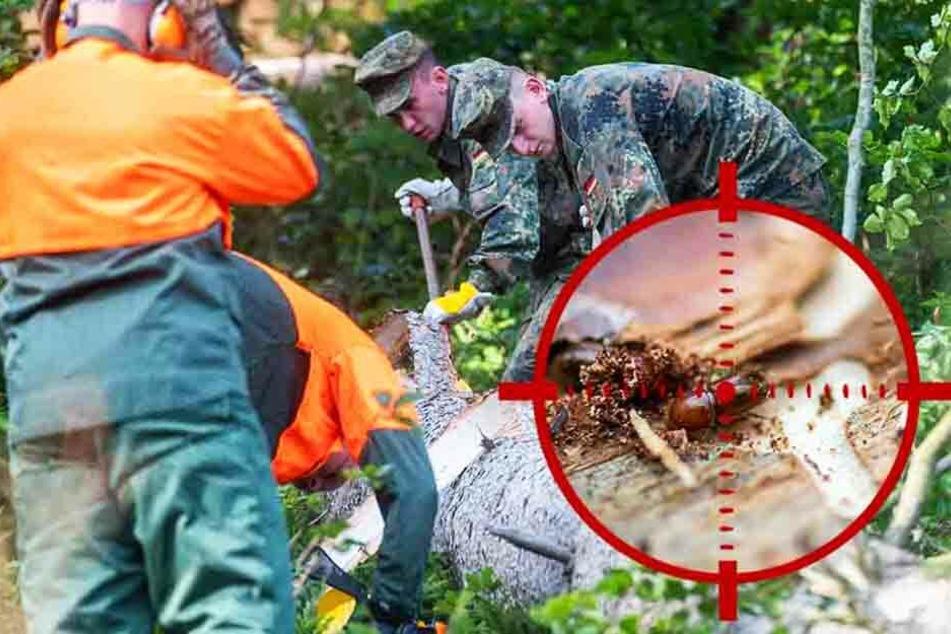 Borkenkäfer-Invasion! Sachsen schickt Soldaten in den Krieg gegen den Baumkiller