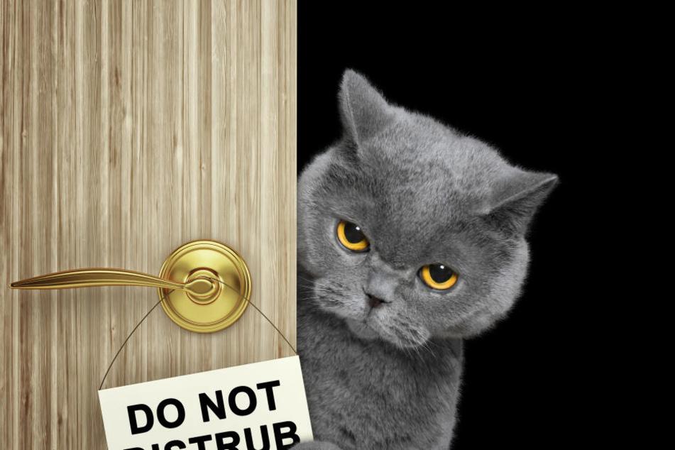 Viele Besitzer verstehen nicht, was mit ihrer Katze los ist.