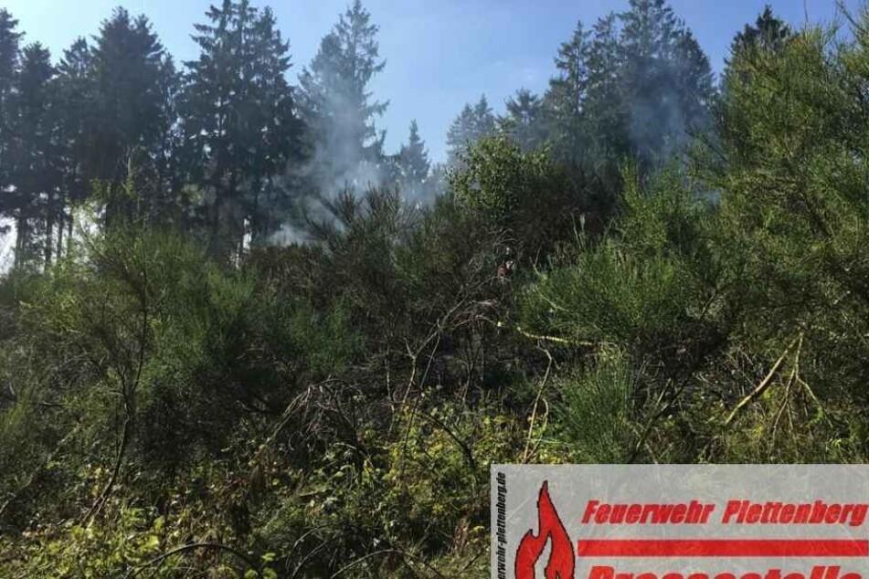 Der Brand hatte sich auf einer Fläche von etwa 3000 Quadratmetern ausgebreitet.