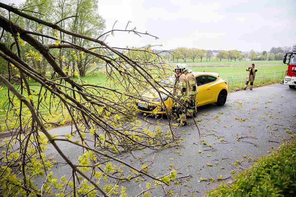 Äste und Bäume lagen in ganz Sachsen nach dem Sturm auf Straßen und Gleisen - wie hier in Seifersdorf.