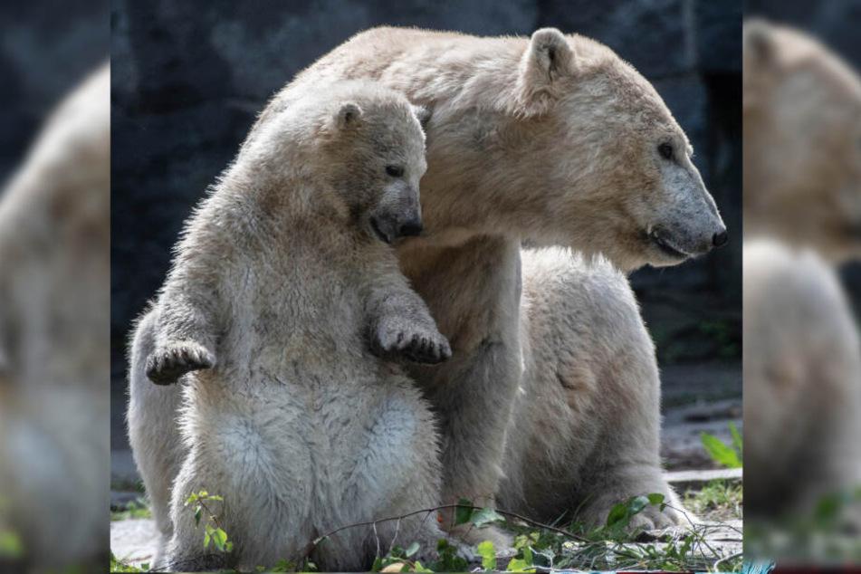Eine ganz enge Bindung: Hertha scheint seine Mama von ganzen Herzen lieb zu haben!