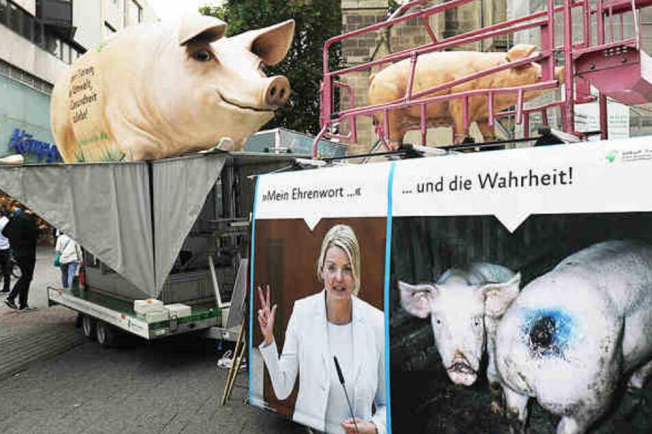 Bildquelle anzeigenTierschützer sind entsetzt über die Zustände in dem Schweinemastbetrieb.