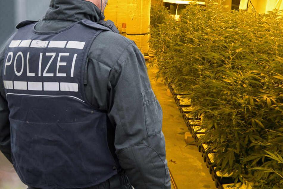 besitzer-geht-selbst-zur-polizei-riesige-drogenplantage-gefunden