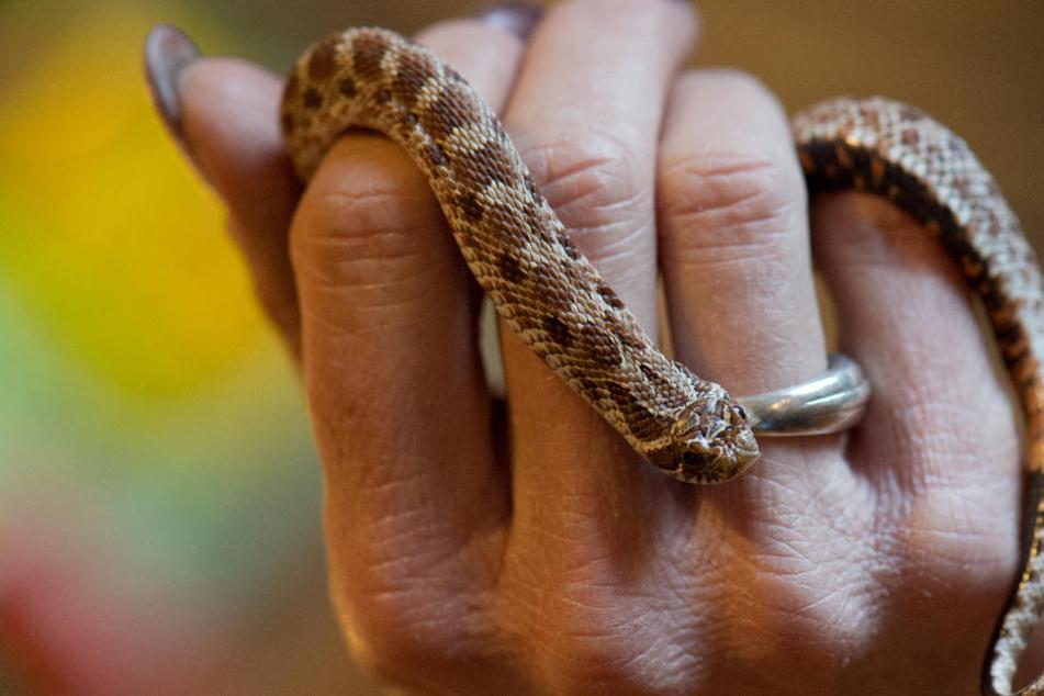 Giftige Schlange!? Mehrfamilienhaus muss evakuiert werden