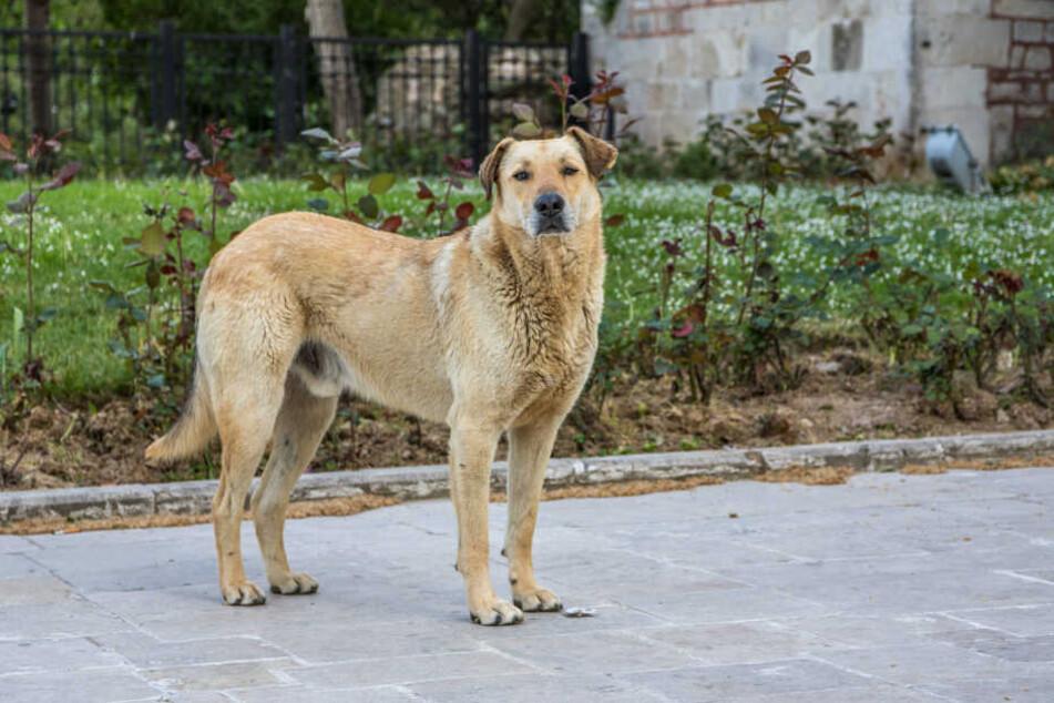 Hund entlaufen? Eine Chemnitzer Facebook-Gruppe hilft bei der Suche nach vermissten Vierbeinern.