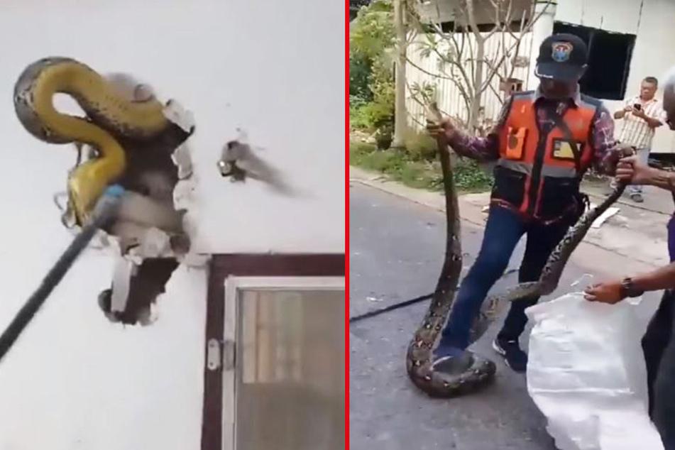 Somchai Subdang (45) hat in der Wand seines Hauses eine Riesen-Python entdeckt.