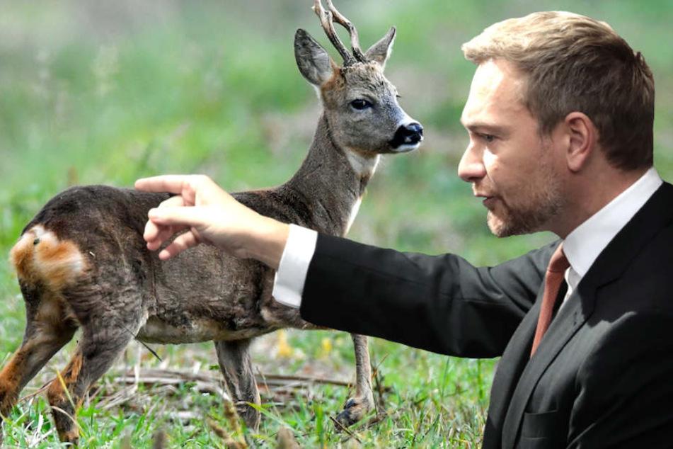 Nur wer kein Herz hat, wäre beim Erschießen eines Rehs nicht gerührt, erklärte Jäger Christian Lindner (39, FDP). (Bildmontage)