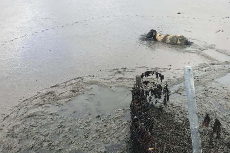 Mit Hilfe der Polizei konnte das Tier gerettet werden.